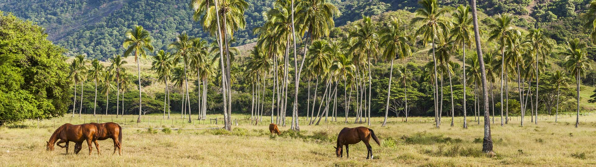 Horse in Bourail, New Caledonia