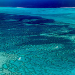 Coral reef in New Caledonia