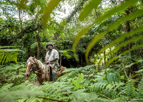 Horse riding in Est coast in New Caledonia