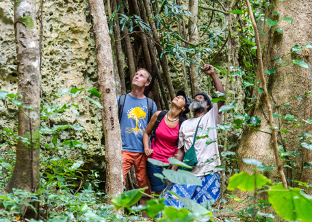 Local guide for a trek by the heart of the forest of Maré New Caledonia