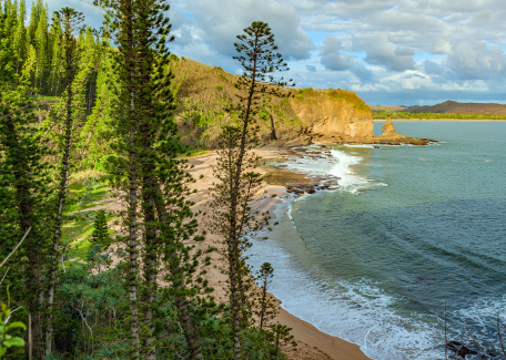 From the column pines of Turtle Bay