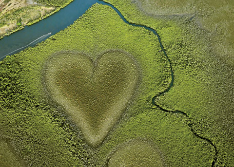 Heart of Voh in New Caledonia