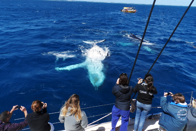 Whale-watching season in New Caledonia