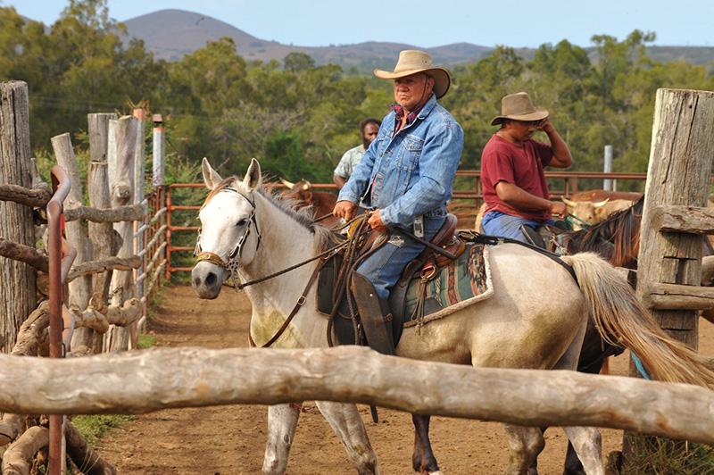 Cowboy, New Caledonia